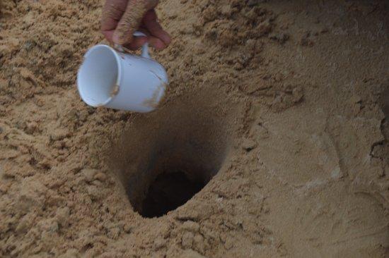 Goolwa, Australia: Having a drink of fresh water