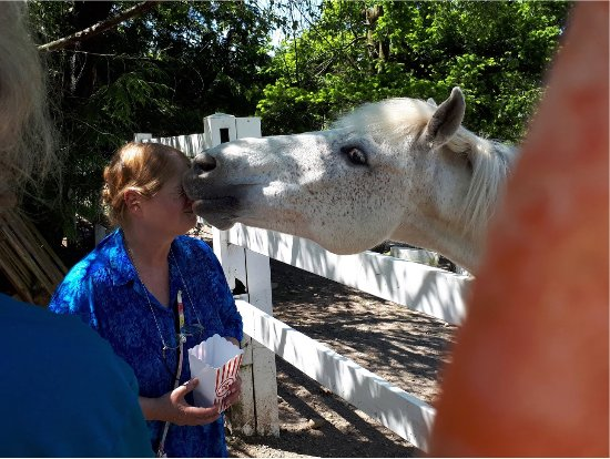 Roberts Creek, แคนาดา: getting a kiss from this sweet horse