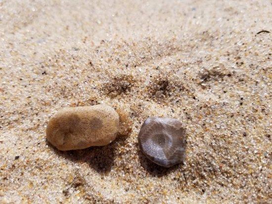 Petoskey State Park : small Petoskey stones