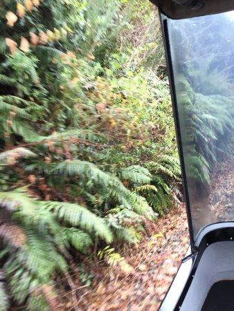 Mamaku, Nuova Zelanda: photo3.jpg