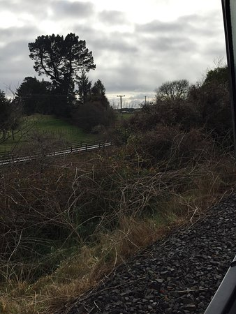 Mamaku, Nuova Zelanda: photo4.jpg