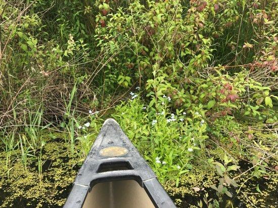 Mercer Slough Nature Park: photo2.jpg