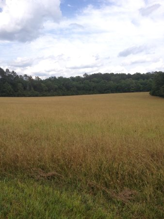 Fort Oglethorpe, GA: IMG_0268_large.jpg