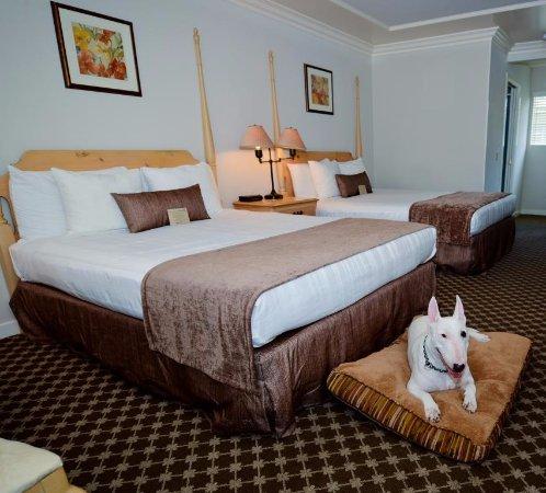 Pet Friendly Hotels In Cambria Ca