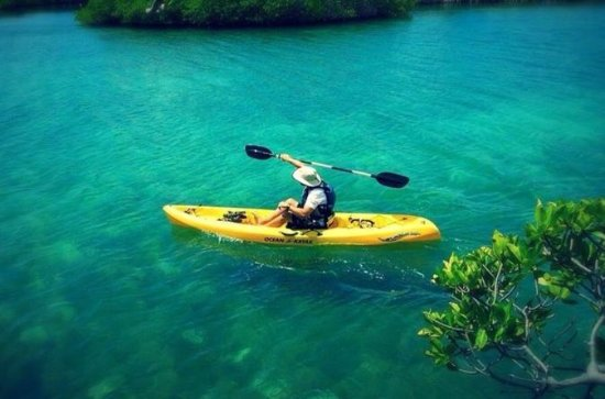 On Your Own: Kayak in the Mangrove...