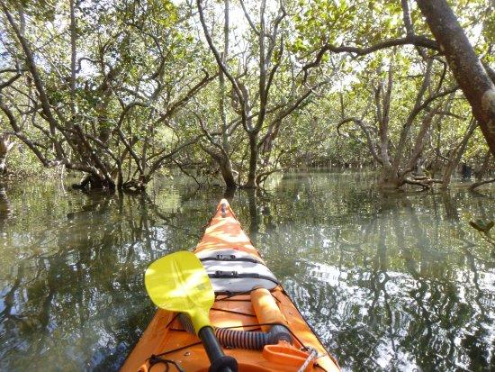 Waitangi, Nova Zelândia: Mangrove Forest