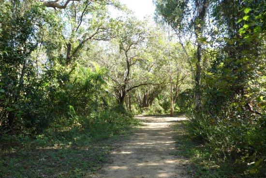 Northern Territory, أستراليا: The walking & golf cart track