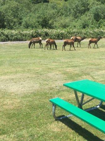 Elk Meadow Cabins: photo0.jpg