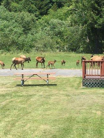 Elk Meadow Cabins: photo1.jpg