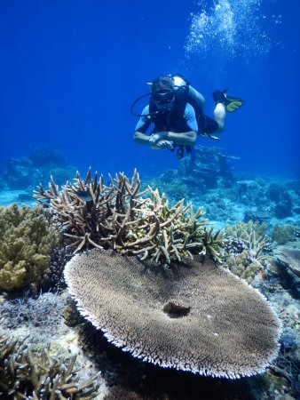 Zamboanguita, Filipinas: This could be you........ diving in Apo Island
