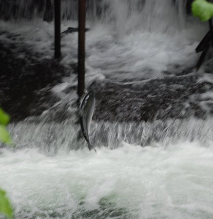 Bear Creek Weir