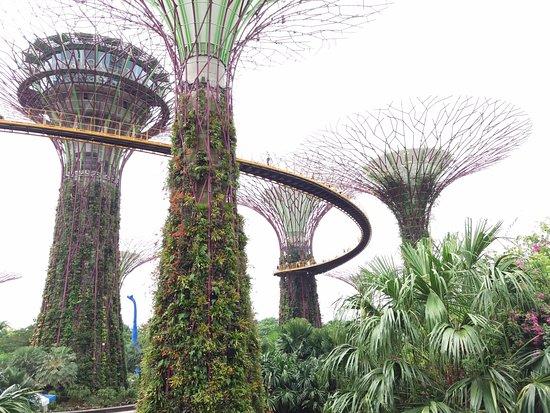 Marina garden by the bay singapura fotograf a de supertree grove singapur tripadvisor for El super garden grove