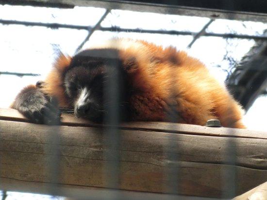 Nogeyama Zoo Bild