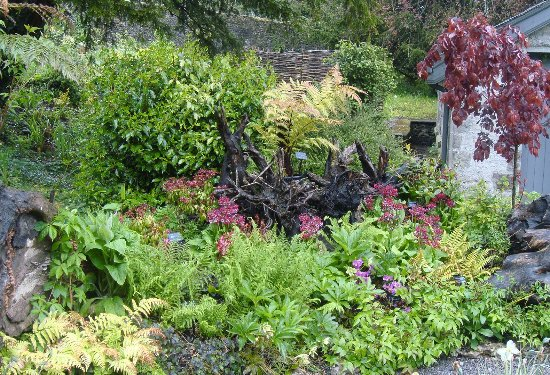 Kendal, UK: The Stumpery