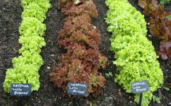 Kendal, UK: Grown outside in May