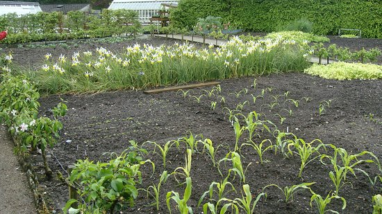 Kendal, UK: The Kitchen Garden