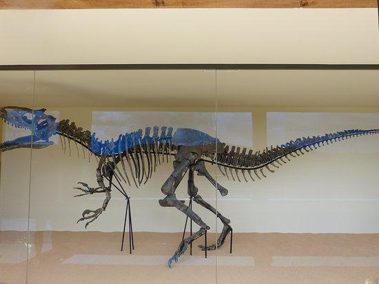 Vezac, Fransa: L'allosaure, 7,5 m de long et 2,5 m de haut