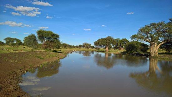Tarangire National Park, Tanzania: En af de mange søer efter regntiden