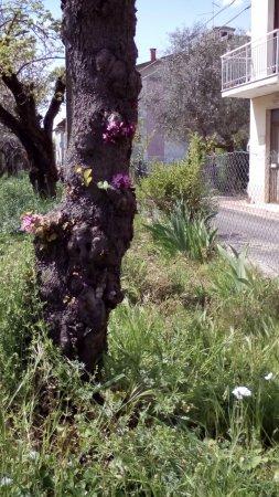 Terontola, Italy: Overal bloemen