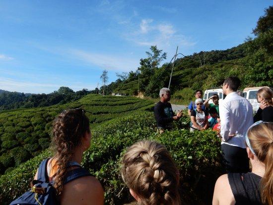 Tanah Rata, Malaysia: Bei der Teeplantage