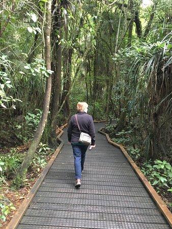 Opononi, Selandia Baru: easy navigated boardwalks