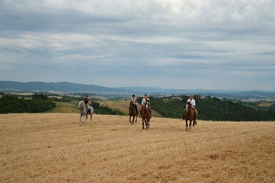Buonconvento, Italia: Trekking a cavallo