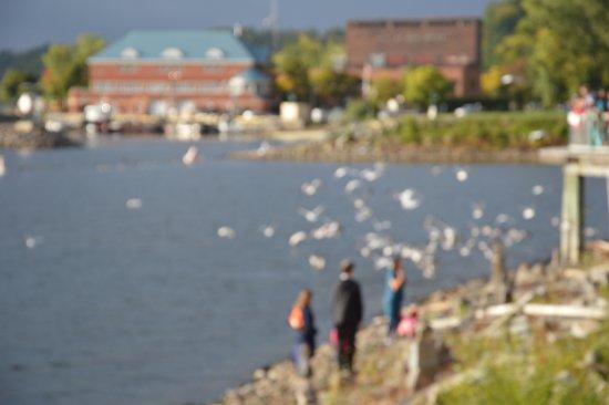 Lake Champlain: Lake Chaplain, Burlington