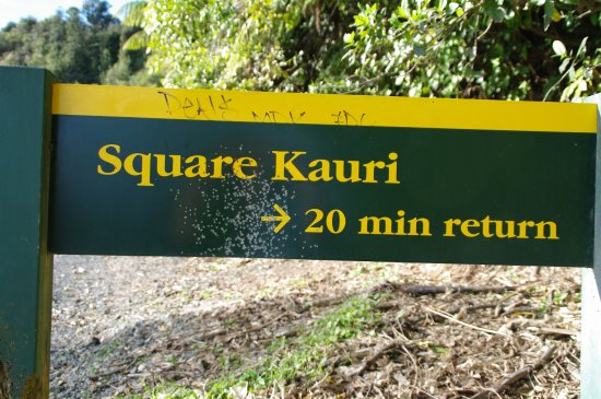 Coromandel, Nouvelle-Zélande : This is the beginning of the walk (upstairs) to the square kauri.