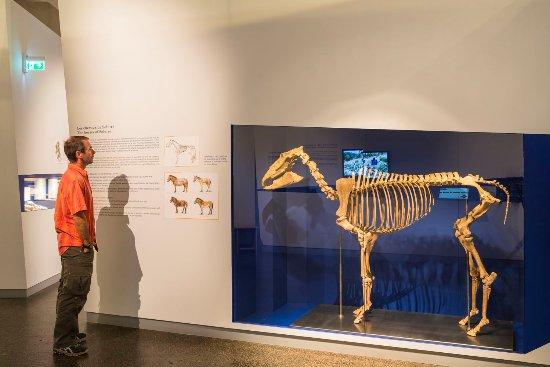 Musee departemental de Prehistoire de Solutre