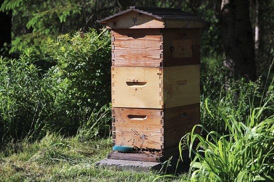 La Patrie, Canada: Nous produisons notre miel
