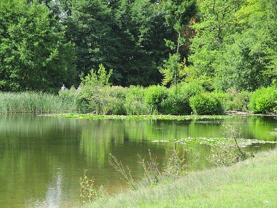 Χέρεφορντ, UK: Lakes, Berrington grounds