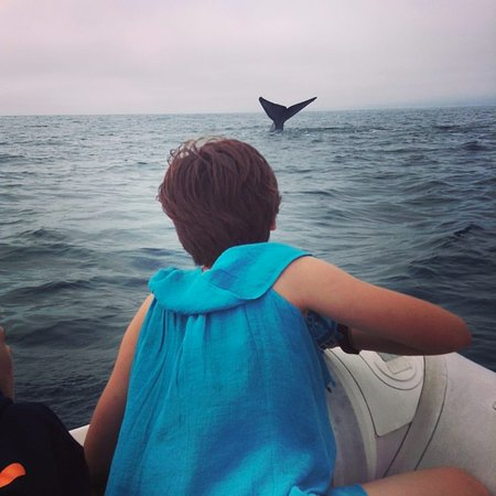 Dana Point, CA: Being able to see the whales was an incredible experience of exploration and adventure for all.