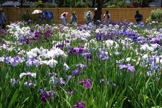 Horikiri Shobu Garden