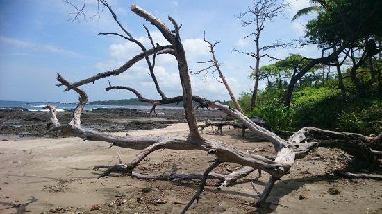 Playa Junquillal, Κόστα Ρίκα: DSC_1238_large.jpg