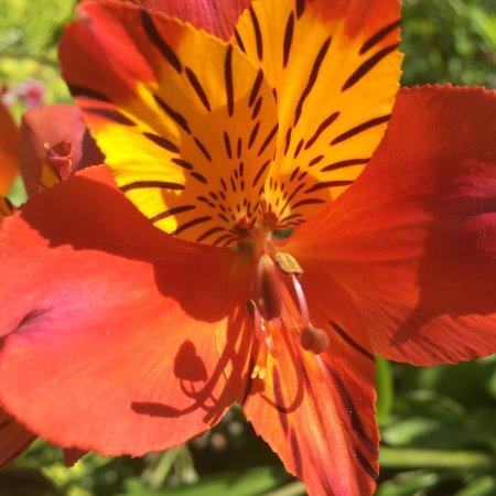 Belvedere House Gardens & Park: photo6.jpg