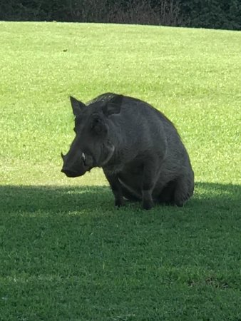 The Victoria Falls Hotel: One of the residents!