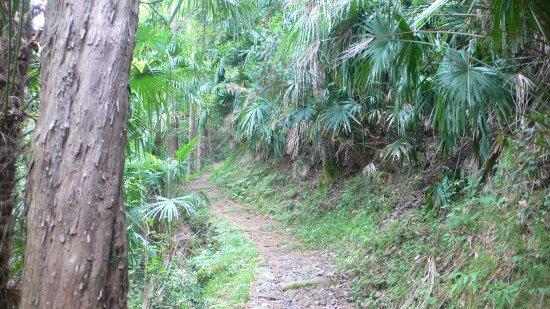 "Plesio, Italy: Wanderung im ""Palmenwald"" des Val Senagra"