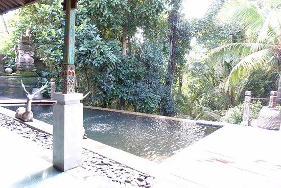 Villa Arya Ubud Photo