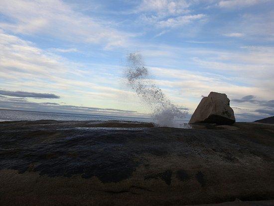 Bicheno, Australie : DSCN0925_large.jpg