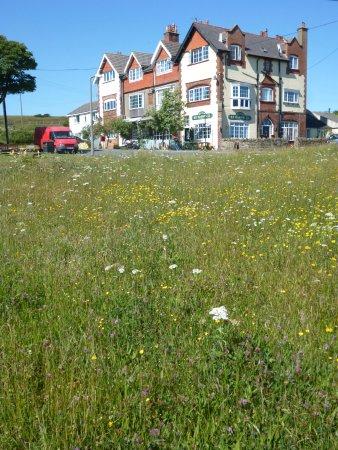 Ravenscar, UK: Wild flower meadow opposite