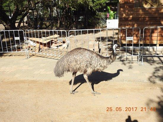 Currumbin, Australia: Emu