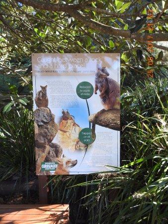 Currumbin, Australia: Info about Wallaby