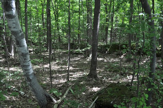 Colchester, Vermont: The paths are quite shady within the park