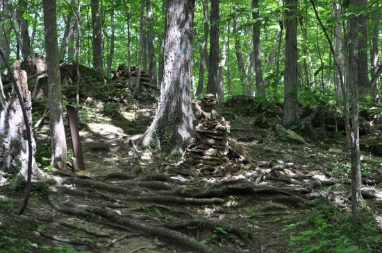 Colchester, VT : typical paths involve a lot of tree roots, with occasional whimsical cairns