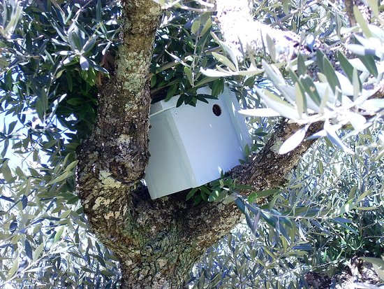 Portalegre, Portugal: One of our bird boxes in an olive tree.