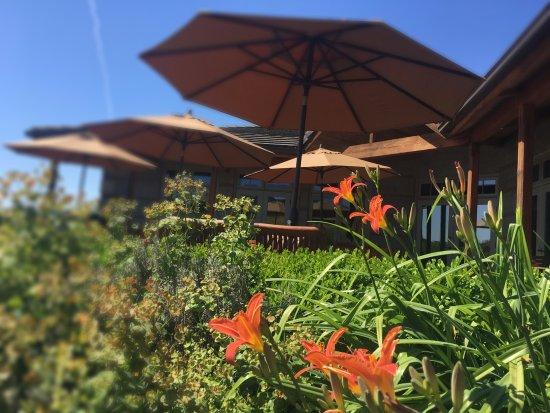 Adelsheim Vineyard: Outside patio tasting area