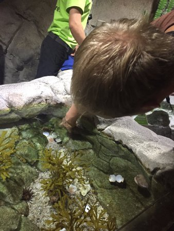 Tempe, AZ: Touching some sea stars and crabs.