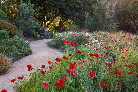 Summer Wild Flowers Field Poppies In Full Bloom At The Mediterranean Garden Picture Of San