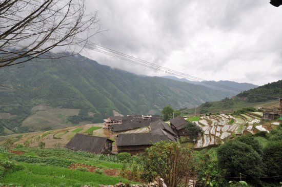 Wendy Wei Tours: rice terrace