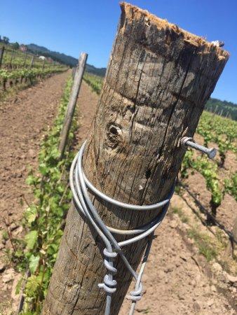 Newberg, OR: Vineyard views